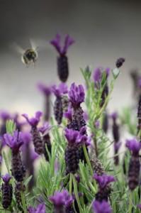 האבקה | ייצור הדבש